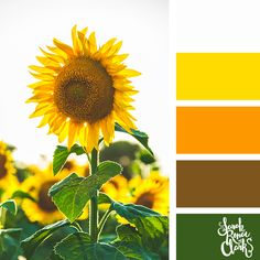 Explore the colors of nature with these 25 color palettes inspired by flowers, bouquets and gardens. Floral color inspiration for wedding color palettes or flower arrangements and more. Yarn Color Combinations, Beautiful Color Combinations, Color Schemes, Summer Color Palettes, Spring Color Palette, Colour Palettes, Sunflower Colors, Design Seeds, Photo Colour