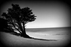 Lone Tree at the Beach. Front Beach #Torquay #Australia