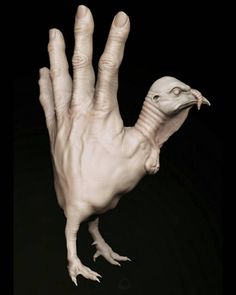 HAND TURKEY (MALEAGRIS MANUS) by #Chris Whitaker