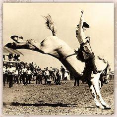 Casey Tibbs on 'Old Gray Mare' - Saddle Bronc Riding - Cheyenne Frontier Days - Cheyenne, Wyoming Western Theme, Best Western, Western Art, Rodeo Cowboys, Real Cowboys, Gaucho, Rainbow Riders, Cheyenne Frontier Days, Bareback Riding