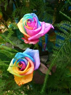 I love this rose it looks so cool!!!!