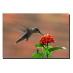 Hummingbird on a Lantana Wall Art by Kurt Shaffer - KS030-C2436GG
