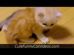 Cute Little Kittens Playing Compilation https://www.youtube.com/watch?v=UnjcbtbWyC8 #Cats
