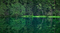 [ UltraHD ] 深緑の御射鹿池 2015 夏 Mishaka Ike - perfect reflection on a pond - Peace In The Valley, Pond Painting, Closer To Nature, Gods Creation, Reflection, Youtube, Water Pond, Youtubers, Youtube Movies