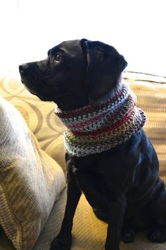 Custom Made, Hand Made Crochet Dog or Cat Cowl/Scarf ~ Clothes for Dogs or Cats ~ Dog Scarf ~ Dog Cowl ~ Dog Sweater ~ Crochet Dog Cowl ~