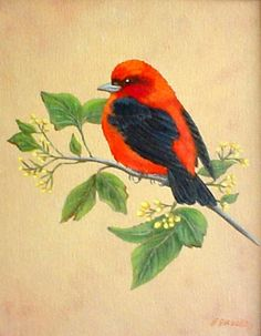 Scarlet tanager painting