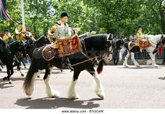 Image results for drum horses