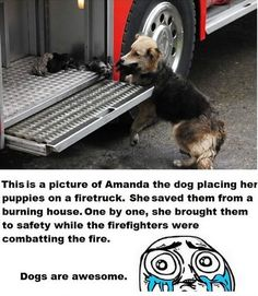 awesome dogs: dog mother saves puppies from a burning house