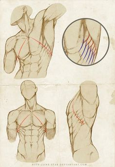 anatomi-model-karakalem-çizimleri-87871