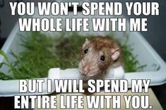 The Thing Is These Memes Of Rats Are Surprisingly Good | Bored Panda