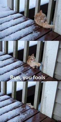 Run, you fools...