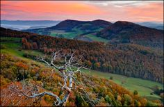 Near Aarau. The old Tree by Jan Geerk on Old Trees, Prim Christmas, Winter Trees, Christmas Vacation, Most Beautiful Cities, Scandinavian Christmas, Sympathy Cards, Tree Of Life, Mother Nature