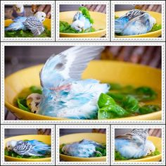 Yummy greens also make great baths! I almost exploded when I saw the middle picture
