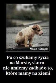 grazmiko – Google+ Funny Motivation, Pokemon, Beautiful Mind, Motto, Memes, True Stories, Animals And Pets, Cute Puppies, Life Lessons