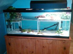 Diy Pet Turtle Tank Basking Platform Turtle Tanks