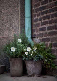 Flower pots...