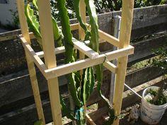 Dragon Fruit Support Structure Arbor Trellis Pitahaya