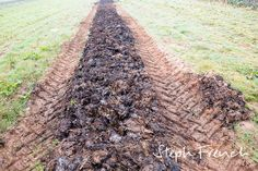 Pig manure spread to fertilises land at the Community Farm, Somerset