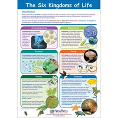 6 kingdoms of life (monera is separated into archeabacteria and eubacteria)