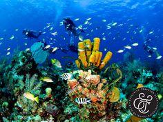 EXCLUSIVE TRAVELER CLUB. Cozumel es la tercera isla más grande de México y uno de los mejores destinos del país, para la práctica del buceo. En su costa abundan arrecifes de coral, considerados como unos de los mejores del mundo, los cuales le impresionarán mientras hace su recorrido submarino. En Exclusive Traveler Club, le invitamos a planear sus próximas vacaciones al Caribe mexicano. En nuestro sitio web obtendrá más información, sobre cómo viajar con el club número uno del mundo…