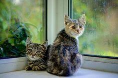 Feral Kittens - Tigger & Princess. (EXPLORE 02/09/2014) | Flickr - Photo de johnlunt