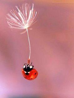 dandelion and ladybug image
