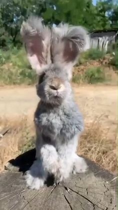 Funny Animal Memes, Cute Funny Animals, Cute Baby Animals, Animals And Pets, Cute Cats, Otters Funny, Funny Owls, Funny Memes, Cat Memes