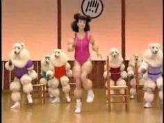 Human / Poodle Workout‽