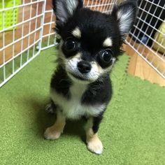 #welpe #hundeleben #hundeliebe #hundinstagram #hundefotografie Instagram, Dogs, Animales, I Love Dogs, Puppys, Pet Dogs, Doggies