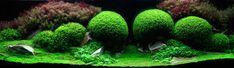 mooi begroeid aquarium, prachtige aquascaping met veel detail