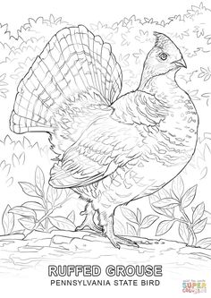 Ruffed Grouse Coloring Page From Category Select 24286 Printable Crafts Of Cartoons Nature Animals Bible And Many More