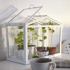 Cute indoor green house! Love the little plant in the tea cup!