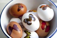 UKKONOOA: Kevättä odotellessa / Temporary tattoos on eggshells