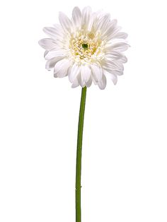 "Good website with white and purple ...good prices!  21"" Gerbera Daisy in White"