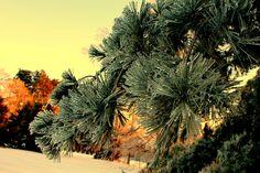 backyard in the winter