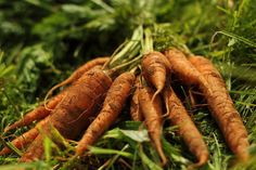 Carrots_juicing | by TheCommunityFarm