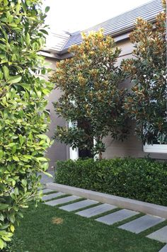 Little Gem Magnolia Trees Gardenia Ficus hedge Classic contemporary landscape style 17 Simple and Beautiful Backyard Landscaping Ideas for Beautify Your Garden Agus Ra.