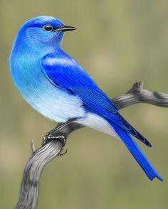 Pretty Birds, Beautiful Birds, Animals Beautiful, Cute Animals, Kinds Of Birds, All Birds, Exotic Birds, Colorful Birds, Vogel Gif