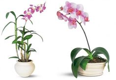 Dendrobium orchids are great for filtering a nasty VOC called xylene out of the air.  They also release oxygen at night, making them great plants for bedrooms