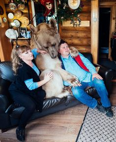 23 years ago, an orphaned cub was adopted. Now 300 pounds and 7-ft tall, the bear is a gentle giant who still lives with his family.    It's not a conventional family, granted, but the Panteleenko unit has been a solid once since they adopted Stepan, an orphaned bear, 23 years ago. Daily Mail reports that Svetlana and Yuriy Panteleenko took in Stepan when he was just 3 months old. He was found by hunters in a forest all alone and in a very bad condition. Twenty-three years later, the three…