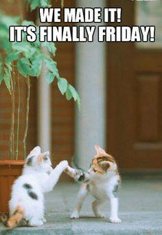 its finally friday! happy friday friday meme on a Happy Friday Humour, Happy Friday Morning, Happy Friday Quotes, Tuesday Humor, Good Morning Funny, Morning Humor, Good Morning Quotes, Happy Weekend, Tgif Funny