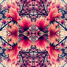 photography pretty trippy beautiful iphone trees mirror psychedelic trip flowers pink pattern spring chillin symmetry instgram