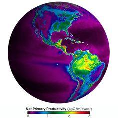 NPP Globe