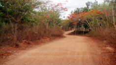 dry african bushland - Google Search
