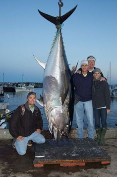 """I am submitting this picture of an 850 lb Atlantic Bluefin Tuna for my father. Two years ago he ventured up to Nova Scotia and fished with Capt. Karl Anderson, Capt. James ""Chuy"" Roberts and, famous lure maker, Andy Moyes and caught this amazing fish. I was lucky enough to go up two weeks before and fish with the same crew but was unsuccessful in hooking any GIANTS! Dad is an IGFA trustee and an avid fisherman and conservationist. As you know his father and my grandfather, the late Walter…"