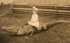 Caption:Giddy up! In the late young Laura Robinson poses for her father, Orlando photographer T. Robinson, as she perches on what we can only assume is a fine example of alligator taxidermy. Vintage Children Photos, Vintage Images, Vintage Kids, Strange Beasts, Orlando Photographers, Buena Park, Dangerous Minds, Childhood Photos, Crocodiles