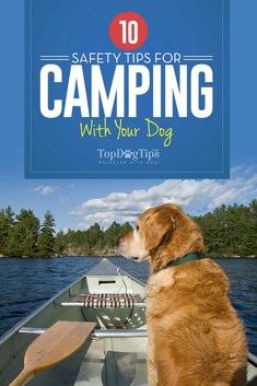 Best Safety Tips for Camping with Dogs