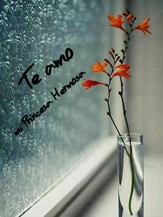 Vase on Window Sill with Orange Flowers Beautiful Flowers, Beautiful Pictures, Love Images, Simply Beautiful, I Love Rain, Deco Floral, Window Sill, Rain Drops, Nature Wallpaper