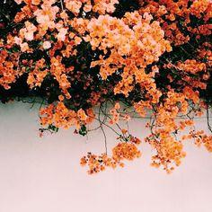 autumn, beautiful, beauty, clean, fall