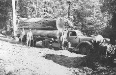 Old Log Trucks | Share